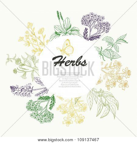 Vector Background With Herbs In A Circle