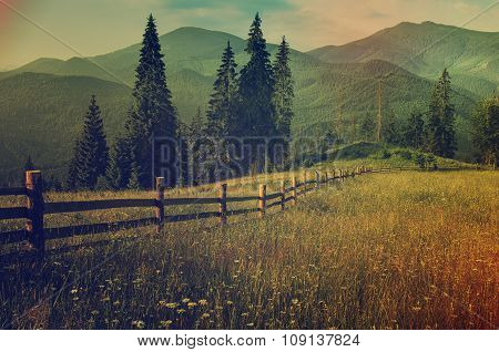 Mountain summer landscape