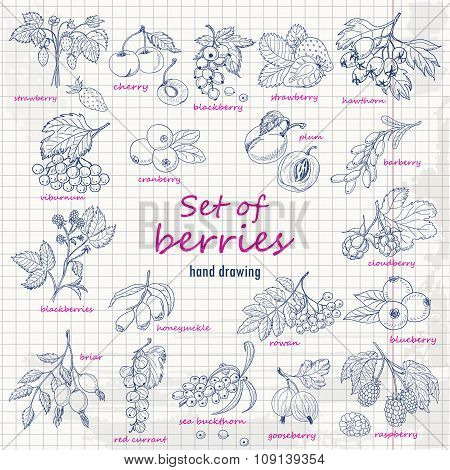 Collection Of Garden And Wild Berries On Paper