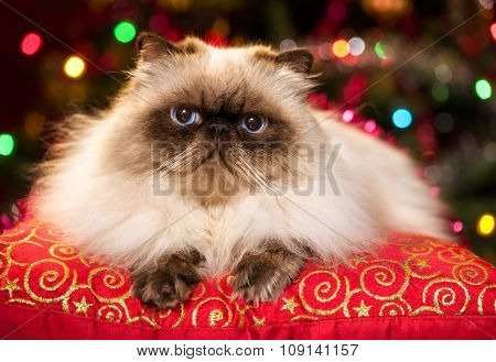 Cute Persian Cat Lying On A Christmas Cushion With Bokeh