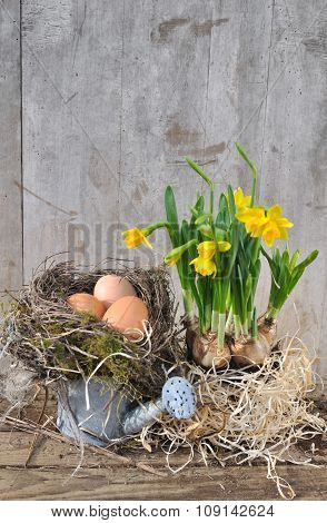 Eggs And Narcissus