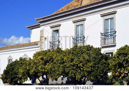 Orange trees outside historical houses in old town Faro