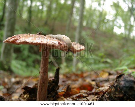 Slug On The Mushroom