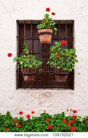 geraniums in pots on an old window