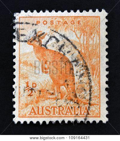 AUSTRALIA - CIRCA 1937: A stamp printed in Australia shows Kangaroo circa 1937