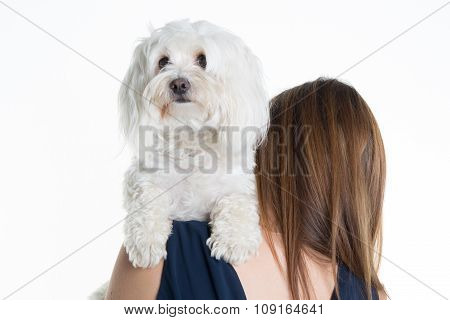 Brunette Girl Kissing Her Dog Isolated On White Background
