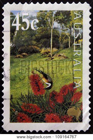 AUSTRALIA - CIRCA 2000: stamp printed in Australia shows Bottlebrush flower circa 2000
