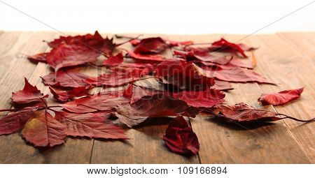 Red autumn leaves on wooden table, isolated on white