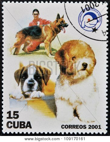 CUBA - CIRCA 2001: A stamp printed in the Cuba shows the dogs circa 2001