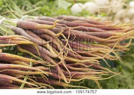 Organic heirloom carrots in yellow red orange and purple