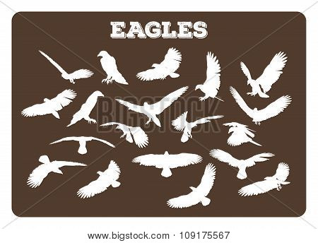 Eagles In Various Poses