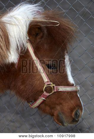 Porträt eines müde Ponys