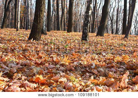 Autumn Park