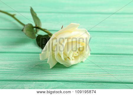 White Rose On Mint Wooden Background