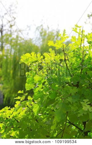 Green bush closeup