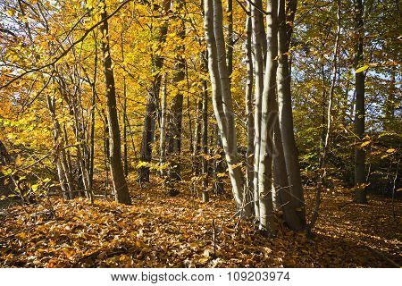 Forest in the beautiful autumn colors on a sunny day.