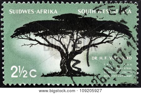 SOUTH WEST AFRICA - CIRCA 1967: A stamp printed in RSA shows Umbrella Thorn Acacia tortilis