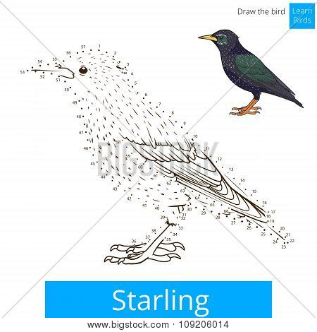 Starling bird learn to draw vector