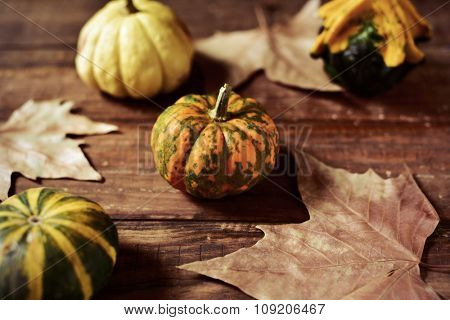closeup of some different pumpkins and dry leaves on a rustic wooden surface