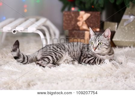 Beautiful cat near Christmas tree with decoration