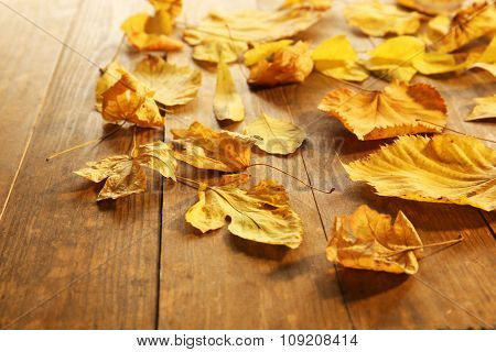 Yellow autumn leaves on wooden table, close-up