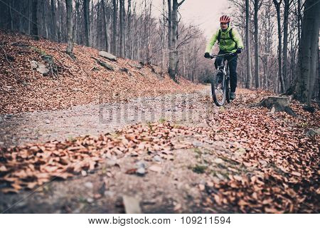 Mountain biker on cycle trail in woods. Mountains in winter or autumn landscape forest. Man cycling