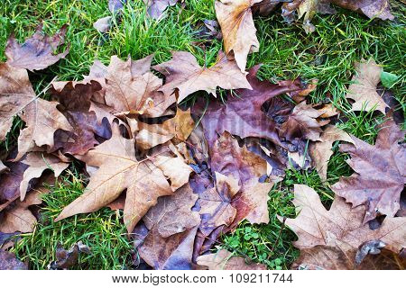 Dead Leaves On Grass