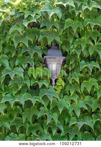 Old lamp in green foliage