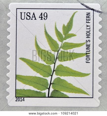 A stamp printed in USA dedicated to Ferns shows fortunes holly fern circa 2014