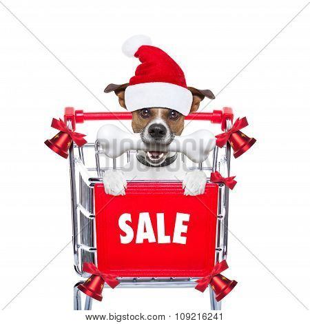 Christmas Sale Dog