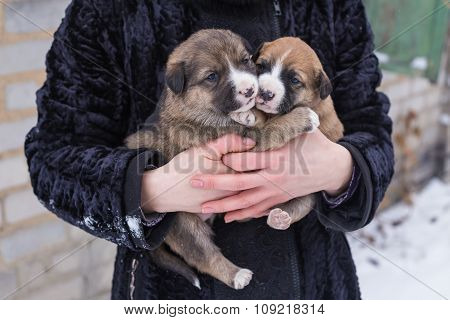puppy in her arms,