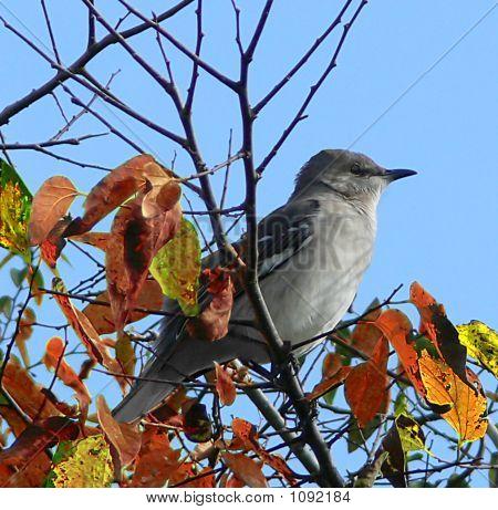 Bird Soft Grey