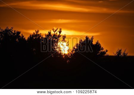 Sunset over the trees