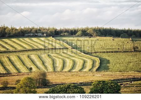 Fields being cut