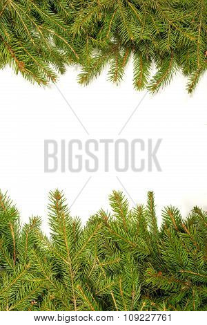 Christmas Background with Tree Branches