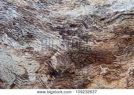 Close up of a dead tree for background