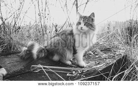Black And White Shot Of Beautiful Cat Sitting On Log At Lake
