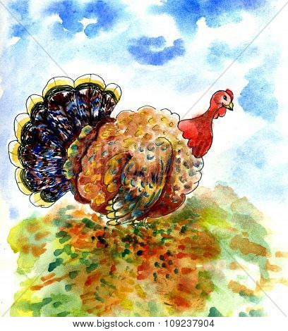 Watercolor Turkey Bird