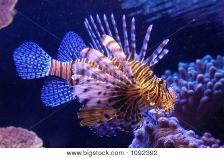 Um peixe no mar vermelho