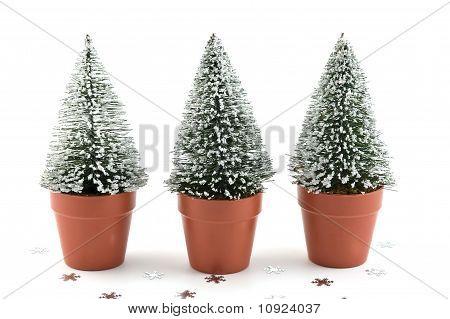 Pequenas árvores salpicadas de neve