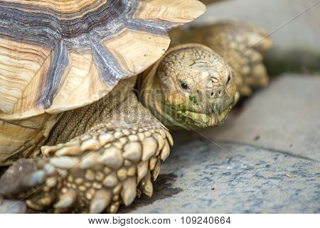 Close Up Of A Tortoise, Side View