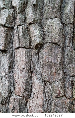 Old Wood Tree Texture