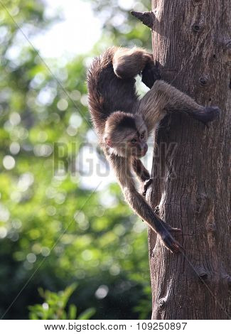 monkeys climb trees