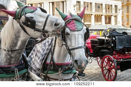 Two White Horses Harnessed To A Carriage, Vienna