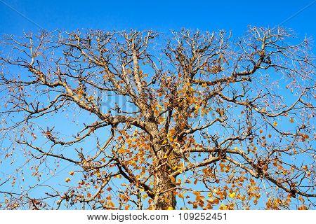 Decorative Tree Trimmed In Flat Shape