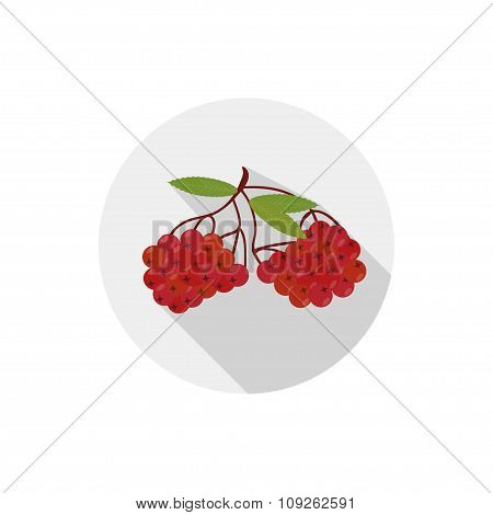 Isolated Flat Icon Of Vegetarian Eating Berries On A White Background. Ripe Red Rowan . Vector