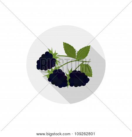 Isolated Flat Icon Of Vegetarian Eating Berries On A White Background. Ripe Black Blackberries . Vec