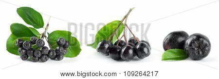 Chokeberry With Leaf