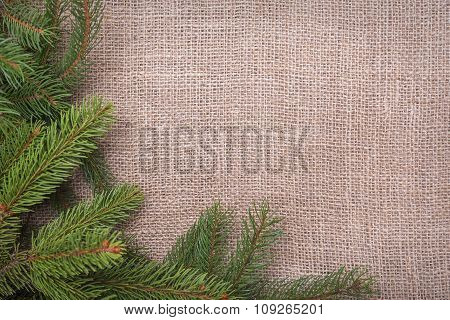 Spruce branches on sackcloth.