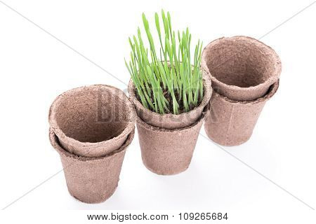 Peat Pots With Green Grass